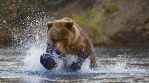 سرعت شاتر در عکاسی از حیوانات