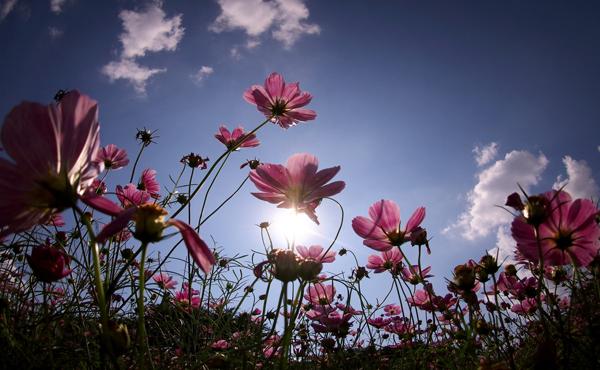 عکاسی از گل
